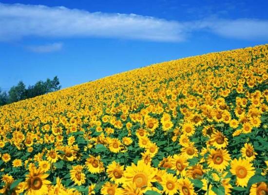 花咲く風景-122