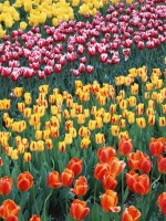 花咲く風景-025