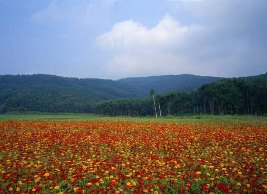 日本の風景-085