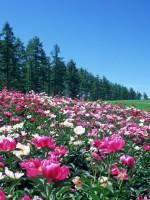 花咲く風景-061
