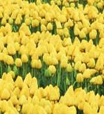 花咲く風景-024
