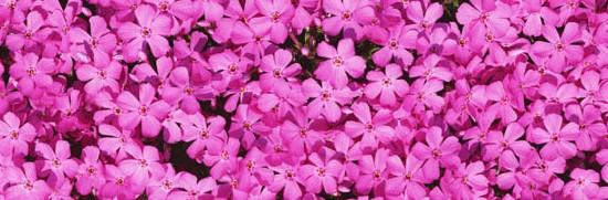 花咲く風景-040
