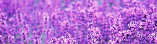 花咲く風景