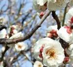 日本看護協会「第3回病院看護管理者懇談会」