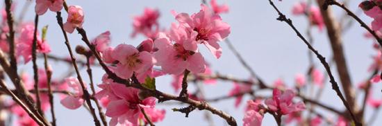 日本病院団体協議会第102回代表者会議 出席のご報告