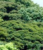 日本病院団体協議会「第95回診療報酬実務者会議」出席のご報告