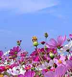 日本病院団体協議会 第108回代表者会議 出席のご報告